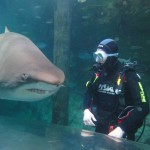 Shark Dive